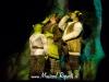 Preview Shrek de musical